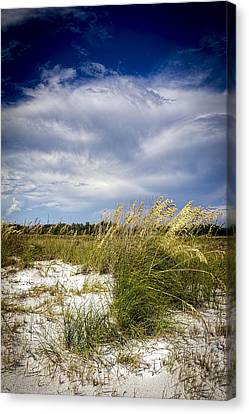 Sugar Sand And Sea Oats Canvas Print by Marvin Spates