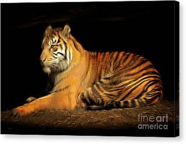 Sumatran Tiger 20150211brun Canvas Print by Wingsdomain Art and Photography