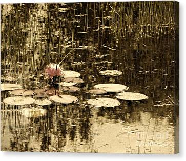 Summer Afternoon Canvas Print by Marcia Lee Jones