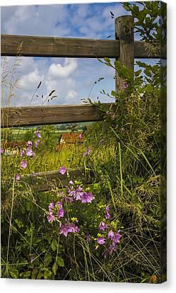 Summer Breeze Canvas Print by Debra and Dave Vanderlaan