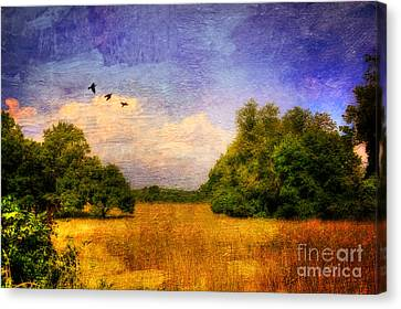 Summer Country Landscape Canvas Print by Lois Bryan