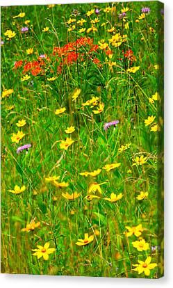 Summer Flowers On The Blue Ridge Parkway I Canvas Print by Dan Carmichael