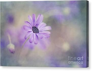 Summer Garden Canvas Print by Priska Wettstein