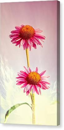 Summer Impressions Coneflowers 2 Canvas Print by Bob Orsillo