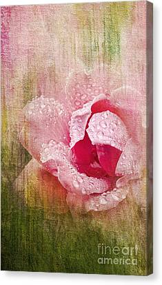 Summer Rose #2 Canvas Print by Betty LaRue