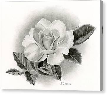 Summer Rose Canvas Print by Sarah Batalka