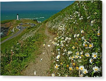 Summer Time At Yaquina Head Canvas Print by Nick  Boren