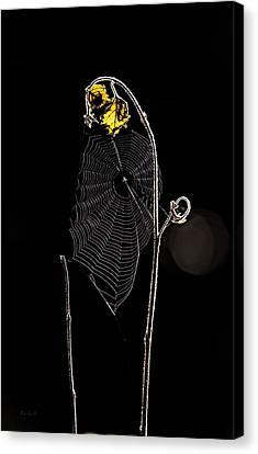 Summers Web Before Sunrise Canvas Print by Bob Orsillo