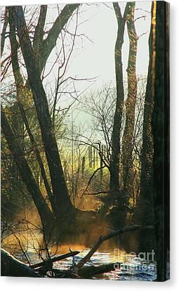 Sun Splash Canvas Print by Douglas Stucky