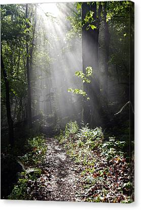 Sunbeams On The Appalachian Trail Canvas Print by Glenn Gordon