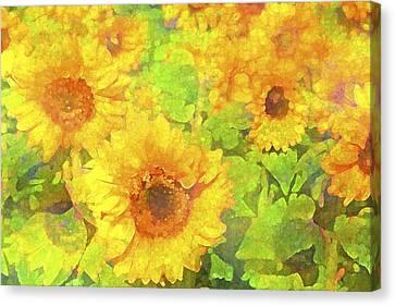 Sunflower 19 Canvas Print by Pamela Cooper