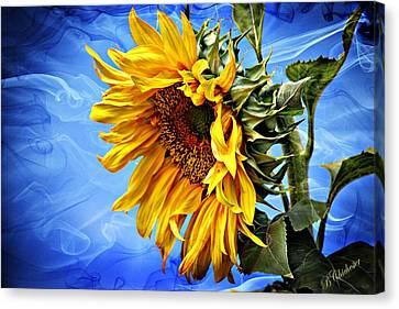 Sunflower Fantasy Canvas Print by Barbara Chichester