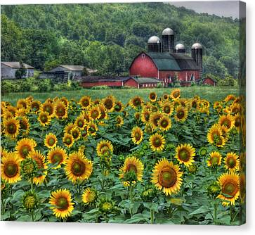 Sunflower Farm Canvas Print by Lori Deiter