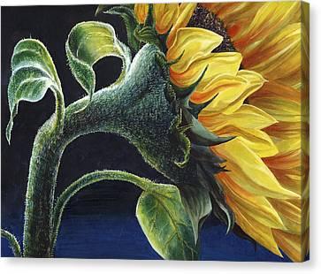 Sunflower Canvas Print by Karen Wright