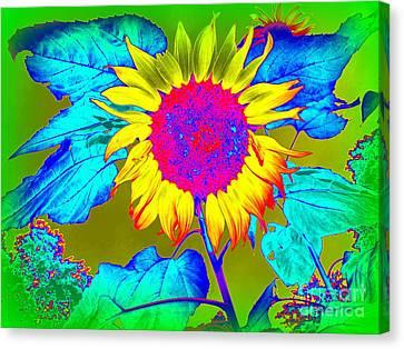 Sunflower Pop Canvas Print by Ed Weidman