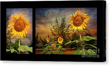 Sunflowers Canvas Print by Adrian Evans