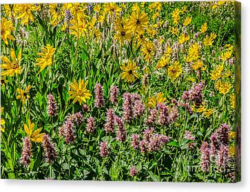 Sunflowers And Horsemint Canvas Print by Sue Smith