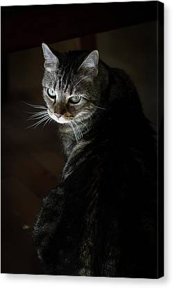 Sunlight Hits Only The Face Of A Male Canvas Print by Al Petteway & Amy White