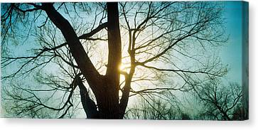 Sunlight Shining Through A Bare Tree Canvas Print by Panoramic Images