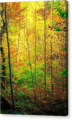 Sunlights Warmth Canvas Print by Frozen in Time Fine Art Photography