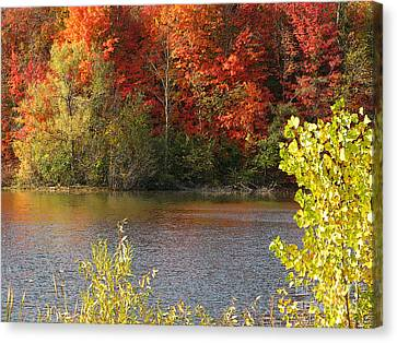 Sunlit Autumn Canvas Print by Ann Horn