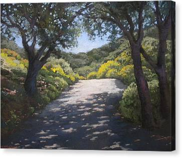 Sunlit Road Canvas Print by Maralyn Miller