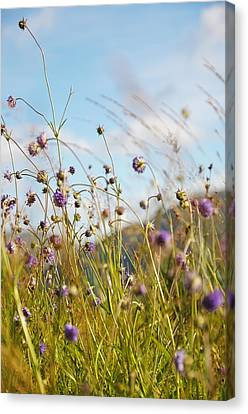 Sunny Bliss. Rest And Be Thankful. Scotland Canvas Print by Jenny Rainbow
