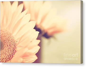 Sunny Side Up Canvas Print by Lisa McStamp