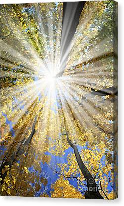 Sunrays In The Forest Canvas Print by Elena Elisseeva