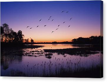Sunrise At Assateague - Wetlands - Silhouette  Canvas Print by Shara Lee