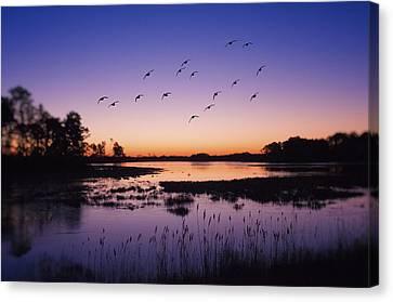 Sunrise At Assateague - Wetlands - Silhouette  Canvas Print by SharaLee Art