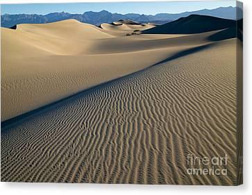 Sunrise At Mesquite Flat Sand Dunes Canvas Print by Sandra Bronstein