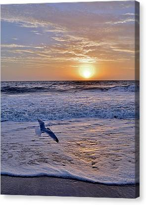 Sunrise Flight Canvas Print by Kim Bemis