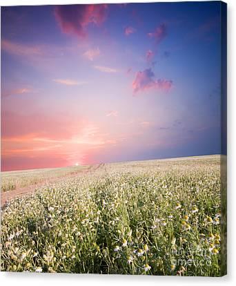 Sunrise Over Flower Land Canvas Print by Michal Bednarek