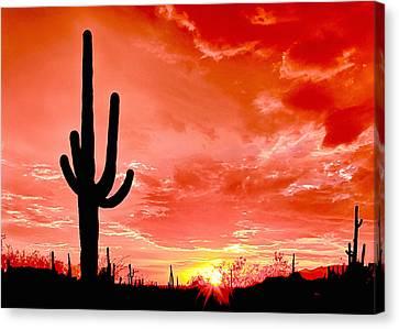 Sunrise Saguaro National Park Canvas Print by Bob and Nadine Johnston