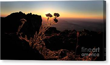 Sunrise Steens Mountain Oregon Canvas Print by Michele AnneLouise Cohen
