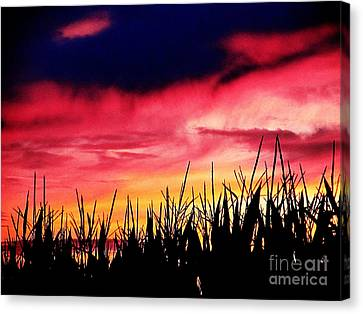 Sunset 365 62 Canvas Print by Tina M Wenger