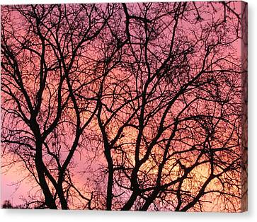 Sunset Behind The Trees Canvas Print by Debra Madonna