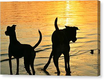 Sunset Dogs  Canvas Print by Laura Fasulo