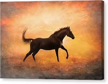 Sunset Gallop Canvas Print by Pamela Hagedoorn