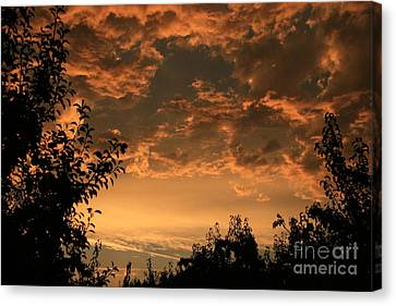 Sunset In The Orchard Canvas Print by Cari Gesch