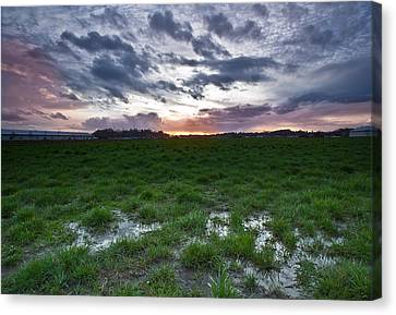 Sunset In The Swamp Canvas Print by Eti Reid