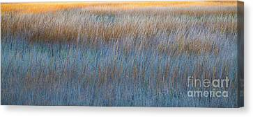 Sunset Marsh In Blue And Gold Canvas Print by Jo Ann Tomaselli
