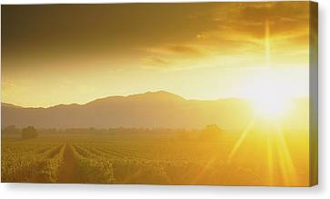 Sunset Over Vineyard, Napa Valley Canvas Print by Panoramic Images