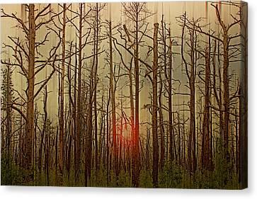 Sunset Thru The Pine Barrens Canvas Print by Tom Gari Gallery-Three-Photography