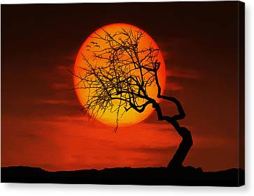 Sunset Tree Canvas Print by Bess Hamiti