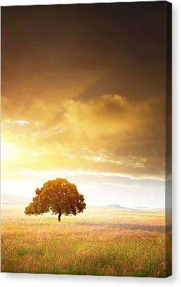 Sunset Tree Canvas Print by Carlos Caetano