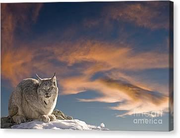 Sunset Warmth Canvas Print by Wildlife Fine Art