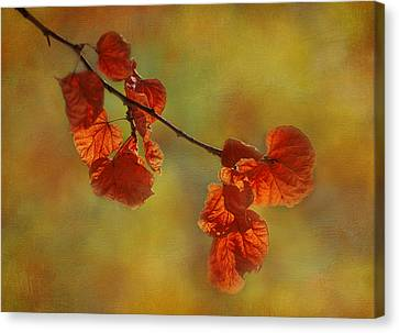 Sunshine And Red  Canvas Print by Ivelina G