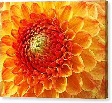 Sunshine  Canvas Print by Gill Billington